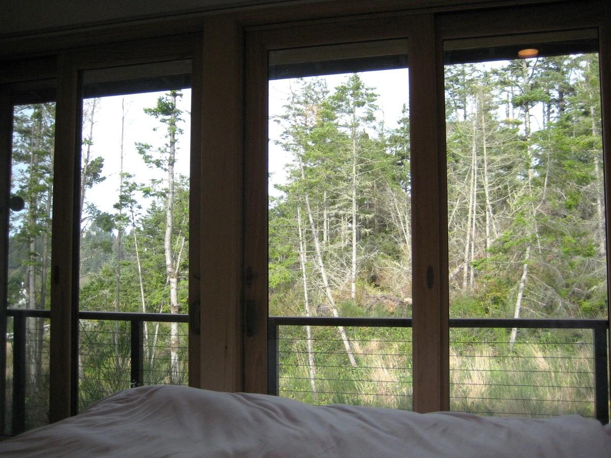 Вид из главной спальни на заросли леса за домом.