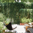 Двор и дом закрыт от городского шума зеленой стеной.