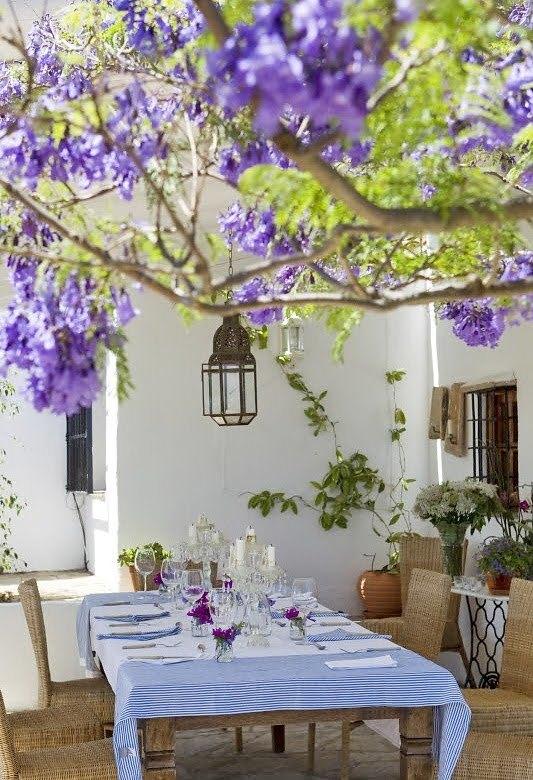 Что может быть лучше обеда в тени цветущего дерева...