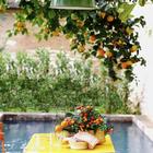 Самое приятное и расслабляющее место в доме в тени старого дерева в саду. (средиземноморский,средиземноморский интерьер,средиземноморский дом,средиземноморский стиль,деревенский,сельский,кантри,архитектура,дизайн,экстерьер,интерьер,дизайн интерьера,мебель,на открытом воздухе,патио,балкон,терраса)
