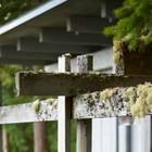Мох на балках подчеркивает интеграцию дома в окружающую природу. (1950-70е,середина 20-го века,медисенчери,медисенчери модерн,модерн,средневекоый модерн,модернизм,mcm,архитектура,дизайн,экстерьер,интерьер,дизайн интерьера,мебель,на открытом воздухе,патио,балкон,терраса,мебель для террасы,фото террасы,идеи террасы,оформление террасы,гриль,барбекю)