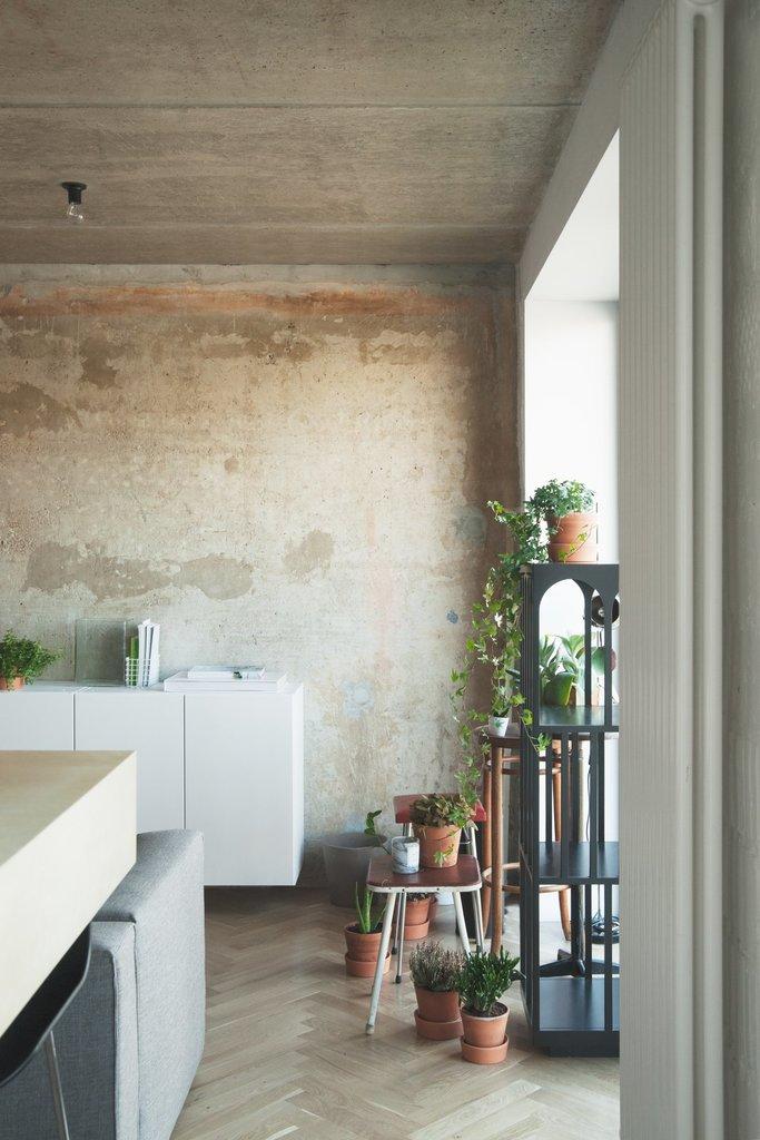 Зеленые растения расположились на стеллаже, столиках и табуретах, оставшихся из прошлой жизни квартиры, возле самого большого и высокого балконного окна в квартире.