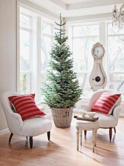 Небольшая елка в корзине без декора в углу комнаты.