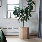 Фикусы в горшках и деревянных кадках встречаются по всей квартире. В данном случае растение оживляет интерьер спальни.