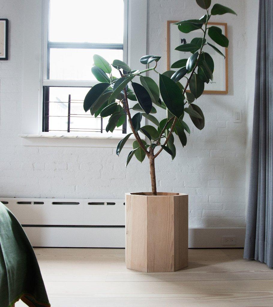 Фикусы в горшках и деревянных кадках встречаются по всей квартире. В данном случае растение оживляет интерьер спальни